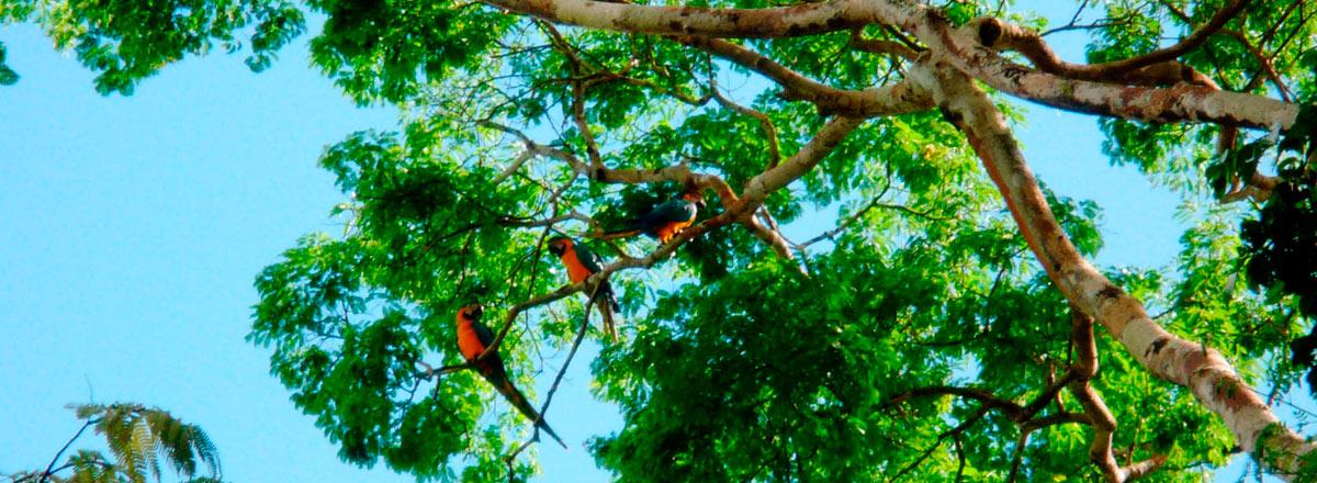 Tour Albergue Amazonas Sinchicuy & Tambo Yanayacu