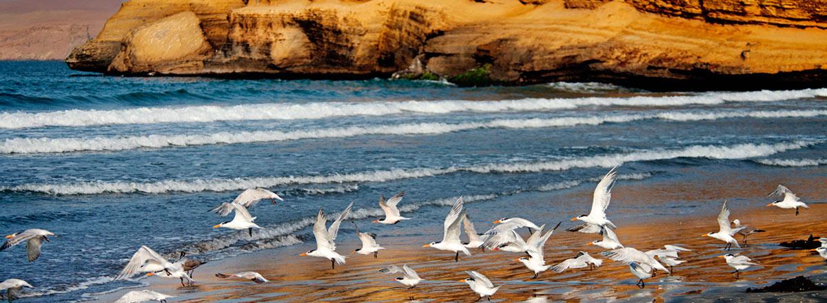 Tour Reserva Nacional de Paracas